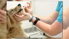 Is it Safe to Give Your Pets Human Medication?