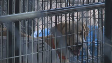 Davidson County Animal Shelter Overcrowded