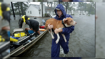 Building Your Disaster Plan For Your Pets