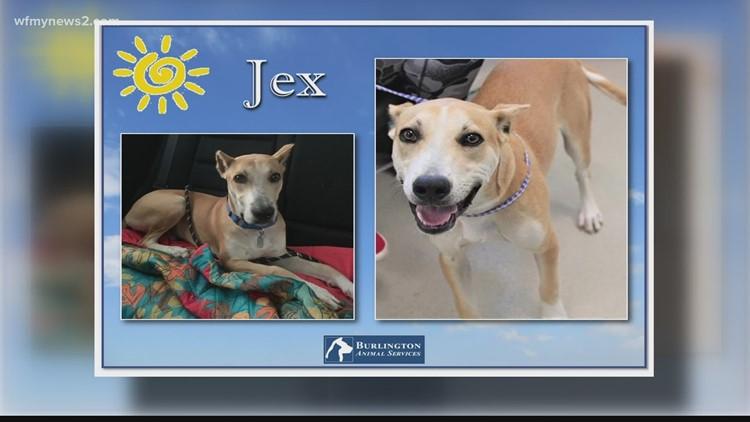 2 The Rescue Pet: Meet Jex
