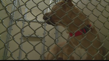 Surrendering Pets To Shelters: What You Need To Know