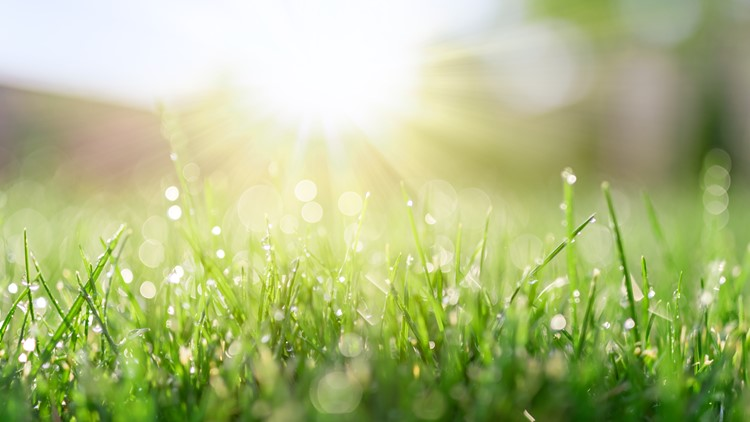 VERIFY Kids: What causes morning dew? It's the dew point!