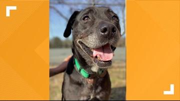 2 The Rescue: Meet Josie