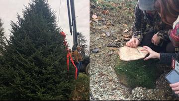 NC Christmas Tree Makes Way To The White House