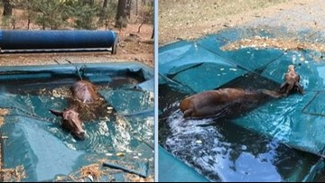 Horse Found 'Shivering Uncontrollably' After Hiding in Pool to Survive California Wildfires