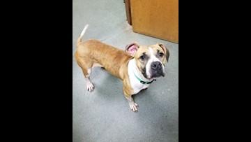 2 The Rescue: Meet Audrey