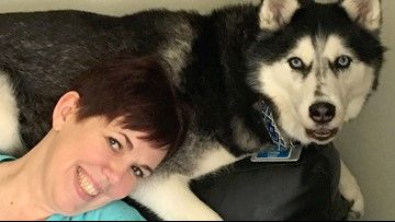 'She Has Never Been Wrong': Siberian Husky Sniffs Out Owner's Ovarian Cancer 3 Times