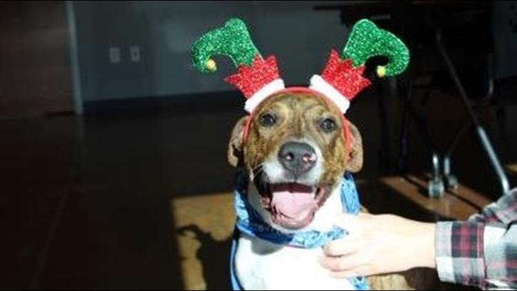 Forsyth Humane Society Offering 90% Off Pet Adoptions Dec. 14-15