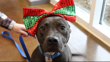 Adopt a Dog for $15, Cat for $10 at Forsyth Humane Society, Dec. 14-15