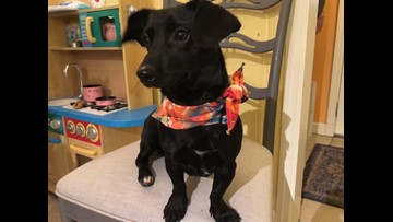 2 The Rescue: Let's Get Eddie Adopted!