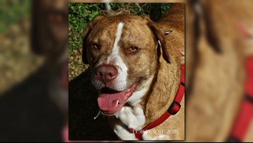 2 The Rescue: Let's Get Rex Adopted!