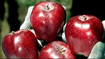 Red Delicious Apples Sold in NC Recalled Due to Possible Listeria Contamination
