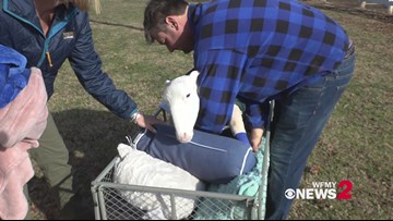 Separated by devotion, Jay Yontz and Kristin Hartness are together at Ziggy's Refuge Farm Sanctuary