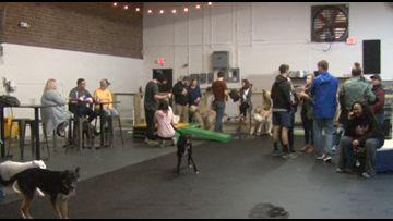 Triad's First Dog Park And Pub Opens in Greensboro
