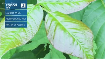 2 Wants To Know: Here's How To Handle Poison Ivy Exposure