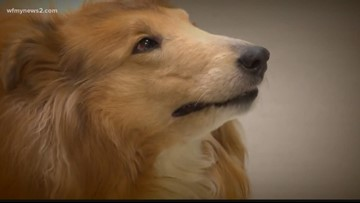 Triad Kennels Warn Pet-Owners Of Disease Ahead of The Holidays