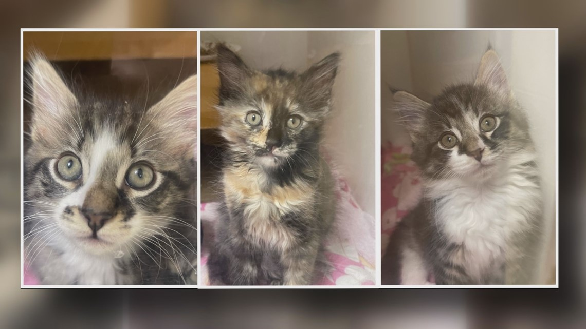 Meet Avocado, Capers, and Apple: 2 The Rescue