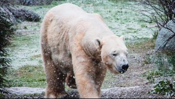 North Carolina Zoo operating on two-hour delay due to freezing temperatures