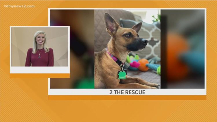Meet Kaylee: 2 the Rescue