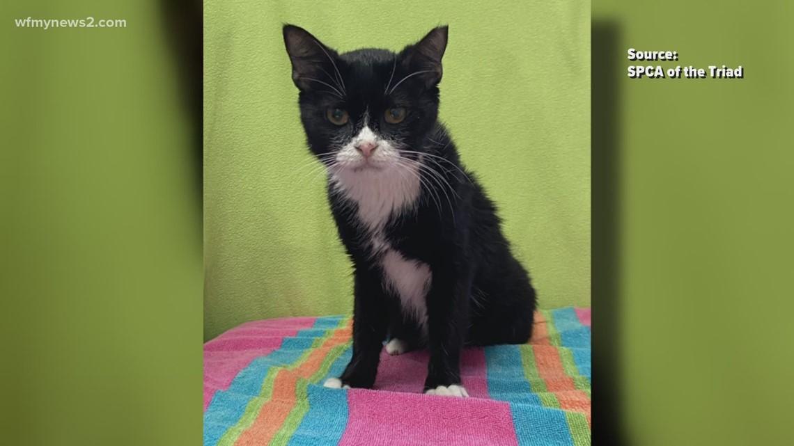 2 the Rescue: Meet Sylvester