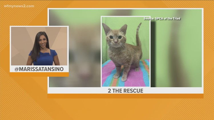 Meet Mango: 2 The Rescue