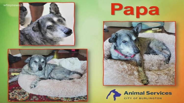 Meet Papa: 2 the Rescue