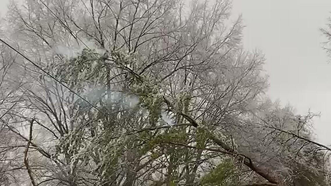 Tree falls on a power line in Eden
