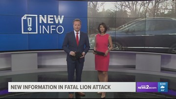 8 Bullets, 3 Tranquilizer Darts Used to Take Down Lion After