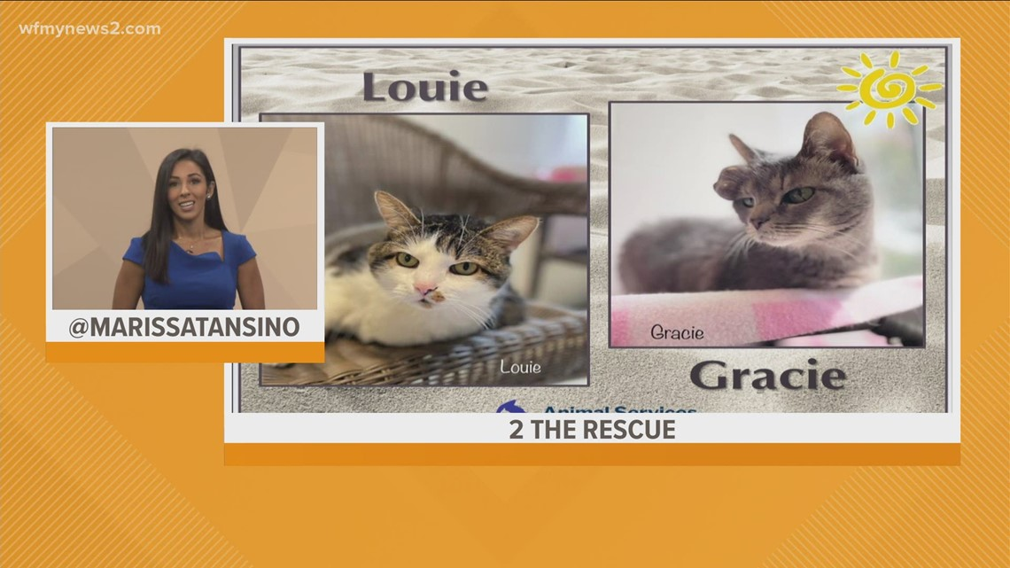 Meet Louie and Gracie: 2 the Rescue