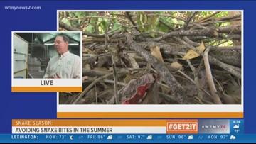 Tips For Avoiding Snake Bites In The Summer