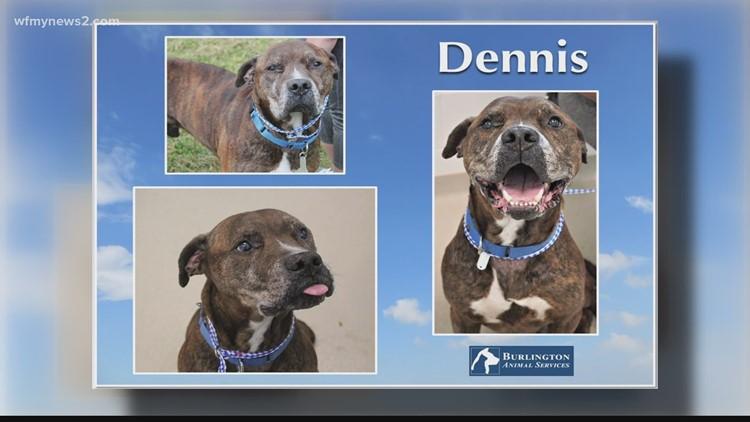 2 the Rescue: Meet Dennis