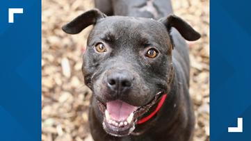 2 the rescue: Meet Sirius