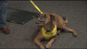 2 the Rescue: Meet Molly