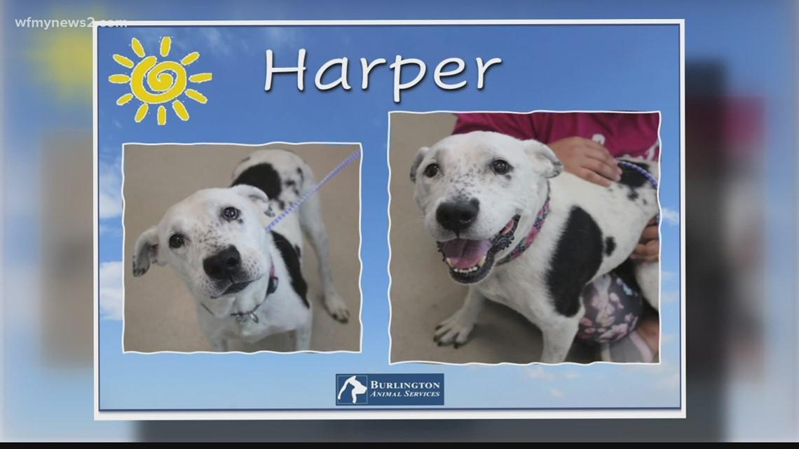2 The Rescue: Meet Harper