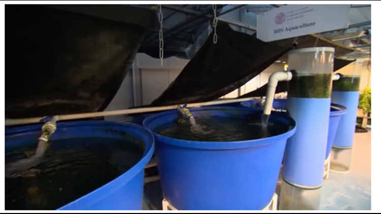 Forget Manure or Fertilizer, Fish Are The New Farming Answer