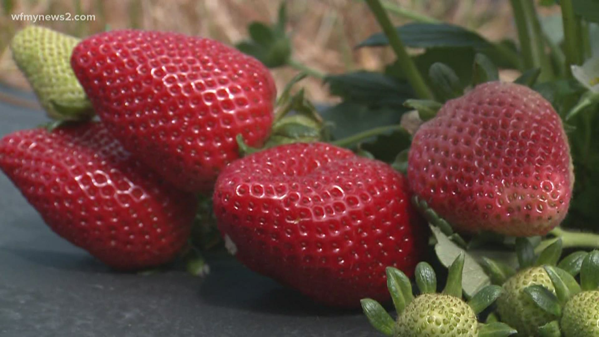 Triad Strawberry Farms Make Changes As States Look To Reopen Wfmynews2 Com