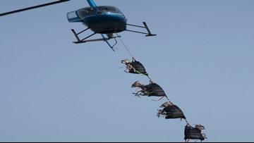 Forget The 'Pony Express' Nebraska Has Flying 'Sheep Shuttle'