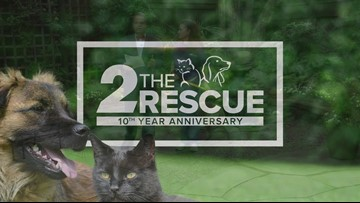 2 The Rescue: Let's Get Rosalyn Adopted!