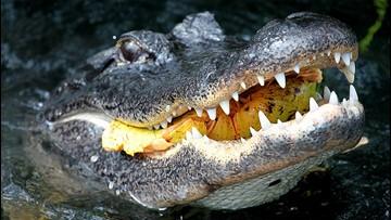 VERIFY: No, Flushing Meth Down The Toilet Won't Create 'Meth Gators'