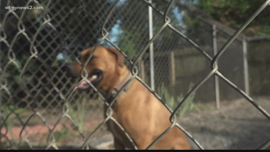 Triad animal rehab group shares insight on dogs rescued in dogfighting ring bust