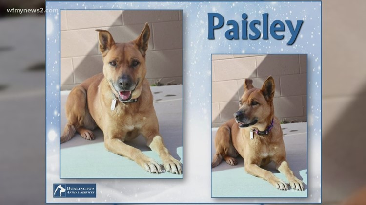 2 The Rescue: Meet Paisley