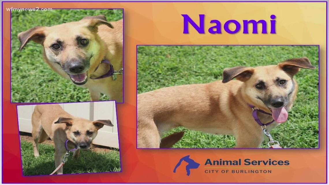 2 The Rescue Pet: Naomi
