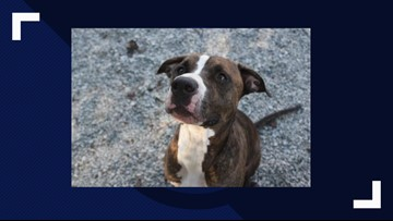 2 The Rescue: Buddy Brown