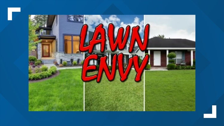 Lush lawns vs Weeds in the yard. Which is better?