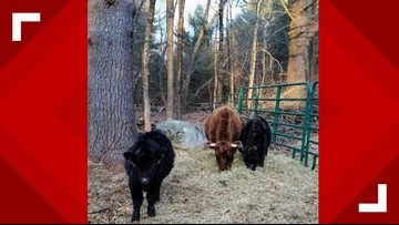 North Carolina Barn Builder Leaves Family With Animals Out In The Cold