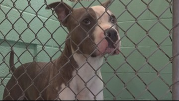Guilford County Animal Shelter Saga Continues:  Operations Manager Resigns Over Poor Facility and Staffing