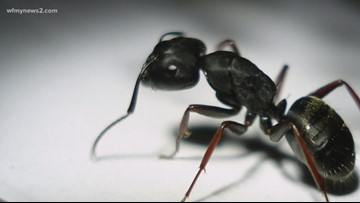 VERIFY: Do Ultra High-Frequency Pest Control Devices Work?