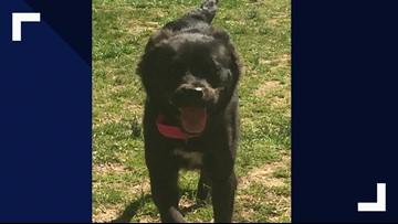 2 The Rescue: Meet Moxie