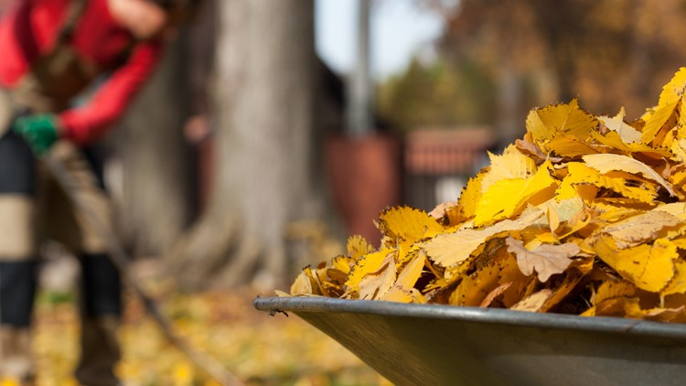 No more leaf raking? No bagging either. You just got free time added to your weekend!