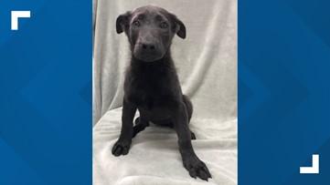 2 the rescue: Meet Emily